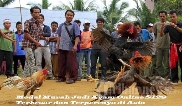 Modal Murah Judi Ayam Online S128 Terbesar dan Terpercaya di Asia